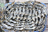 Dried fish on the grill to sell in the market