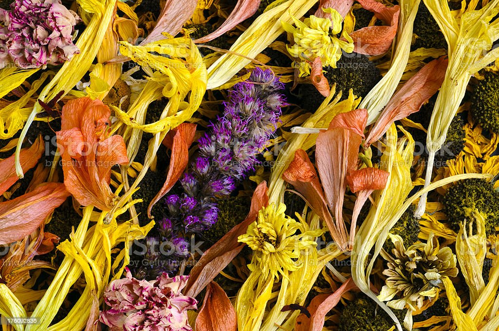 Dried Flower Pattern, Background or Texture royalty-free stock photo