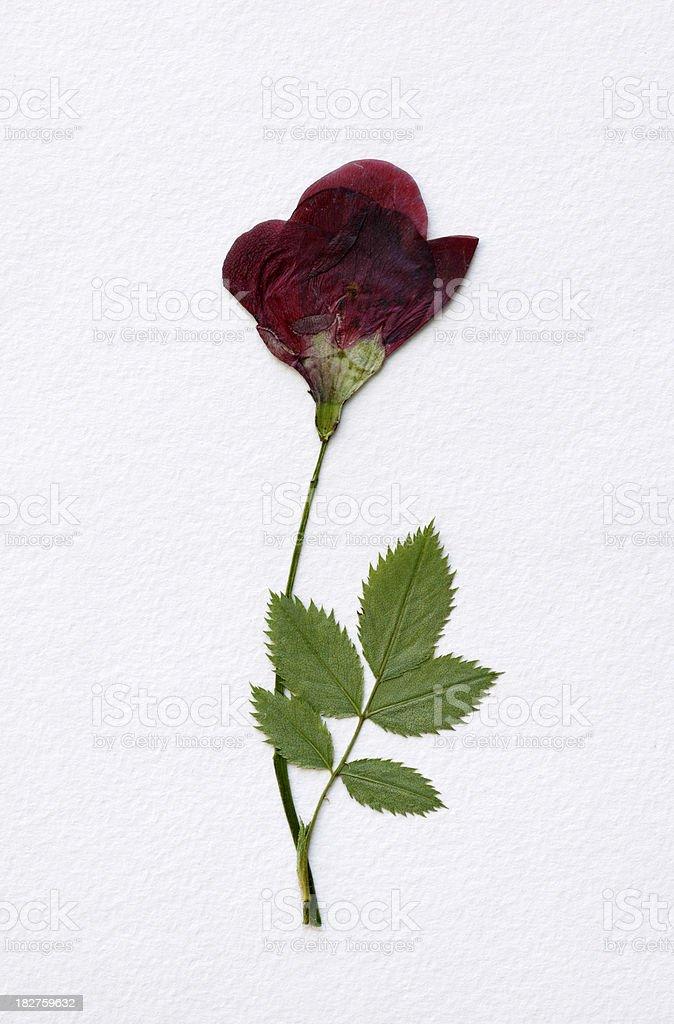 Dried Flower stock photo
