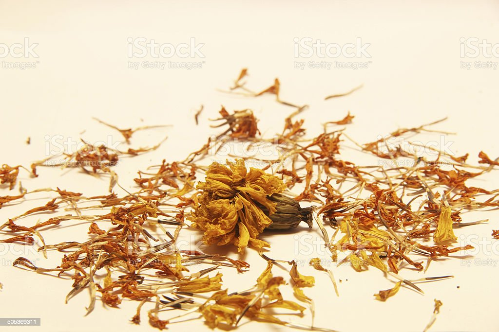 dried flower stock photo