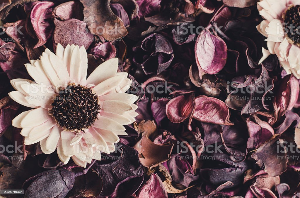 Dried flowers and leaf background stock photo