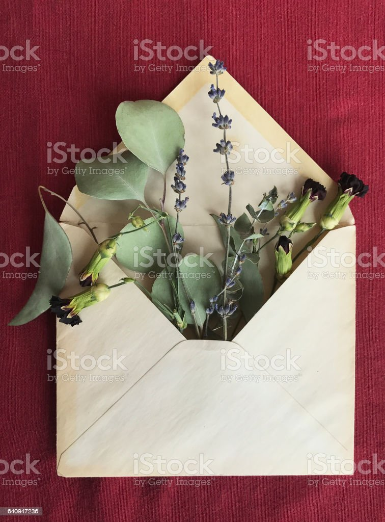 Dried Flowers and Plants in Old Envelope stock photo