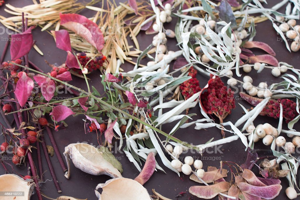 Dried flowers and plants stock photo