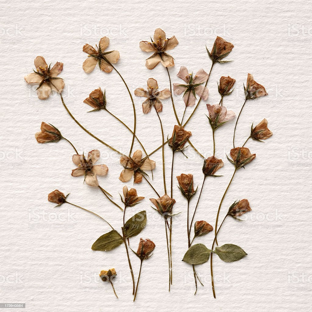 Dried Flowers Arrangement royalty-free stock photo