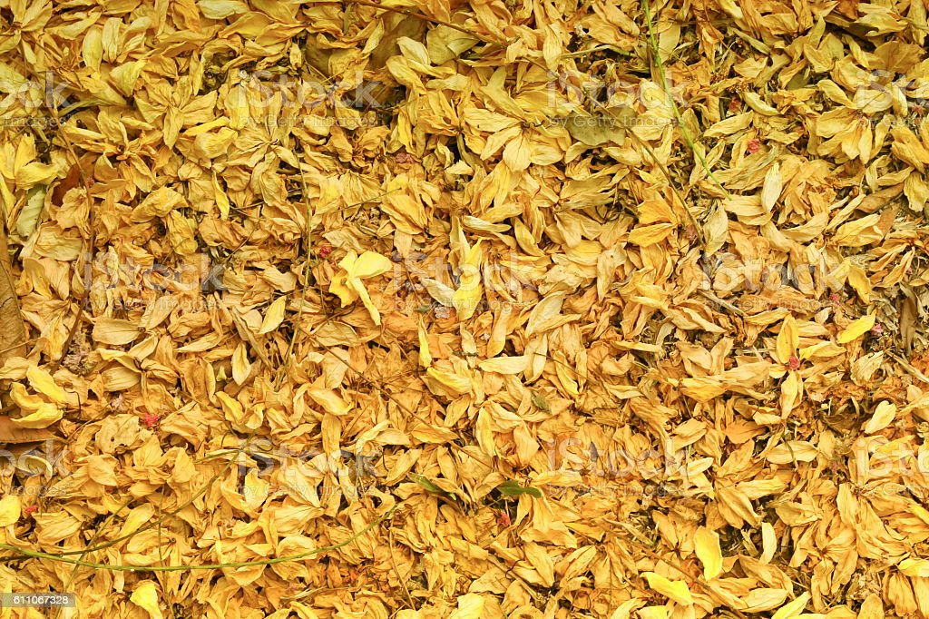 Dried flowers fall background on the floor on ground. stock photo