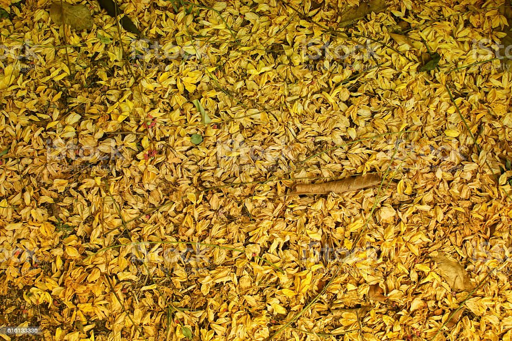 Dried flowers fall on the floor, Golden  Flowers on Ground. stock photo