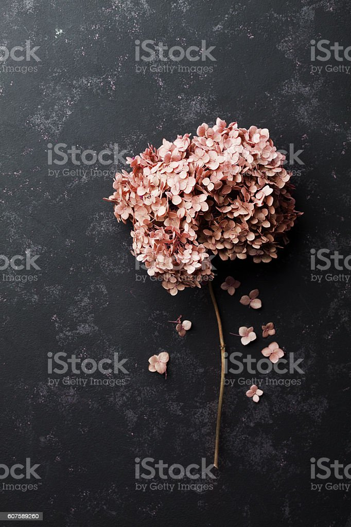 Dried flowers hydrangea on black vintage table top view. Flat lay...