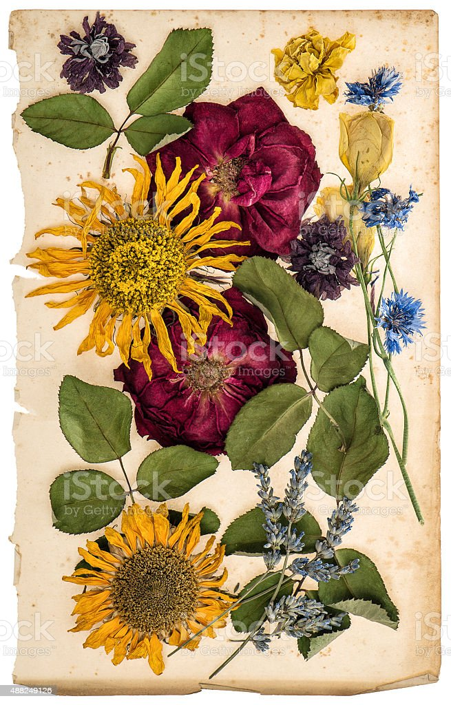 Dried flowers on aged paper sheet. Lavender, roses, sunflowers stock photo