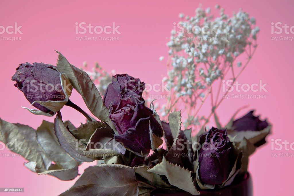 Сухое цветов Стоковые фото Стоковая фотография