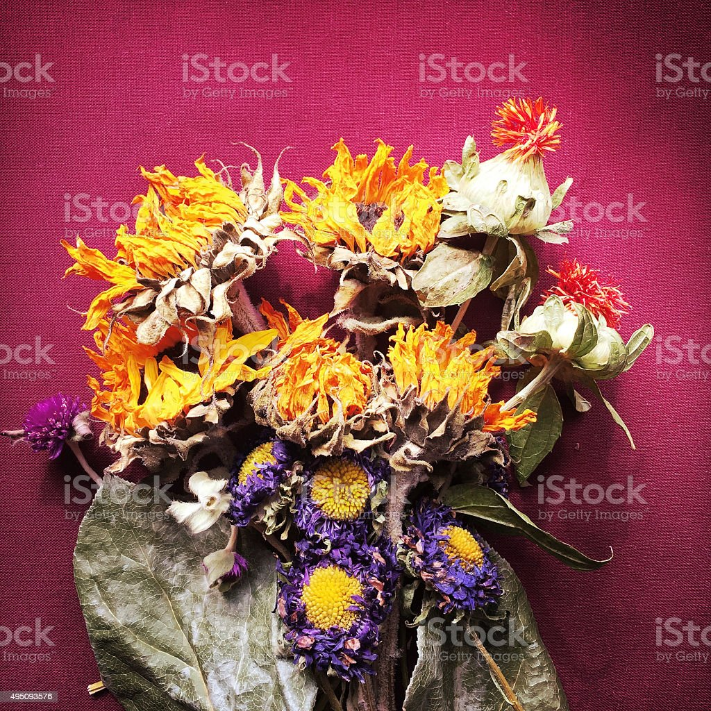 Dried Flowers stock photo