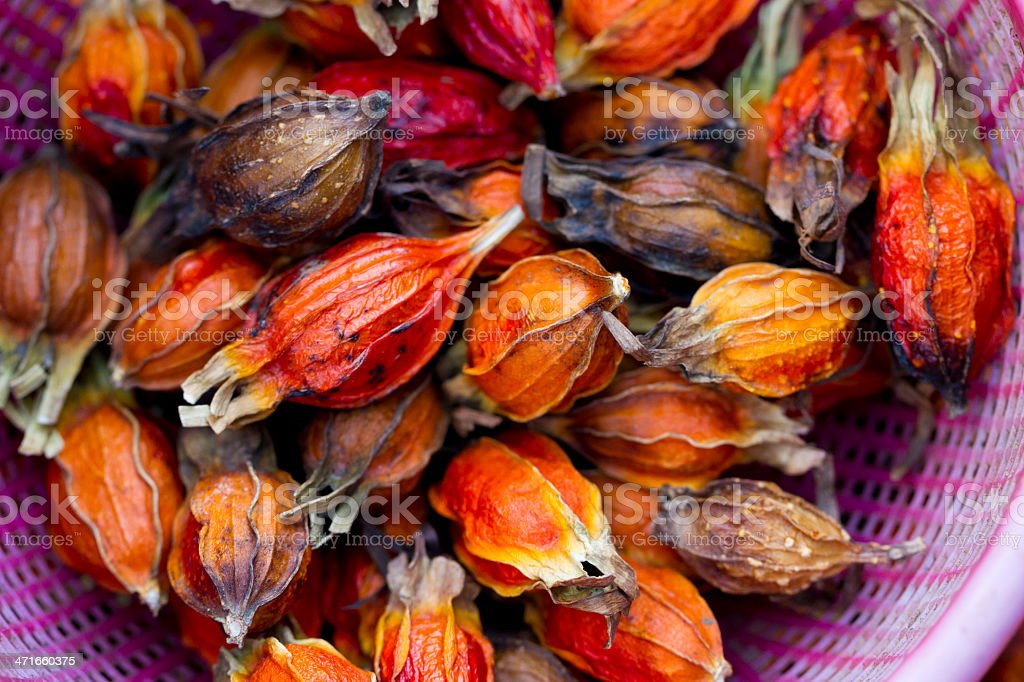 Dried Fruit from Chinese Lantern Plant stock photo