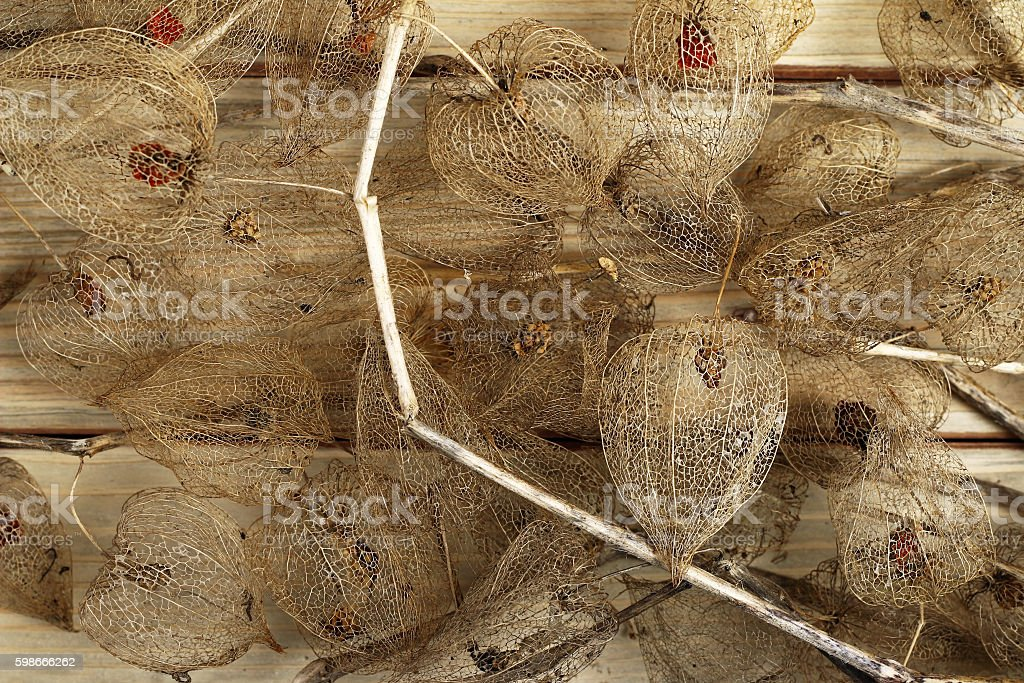 Dried Fruits of the Cape Gooseberry stock photo