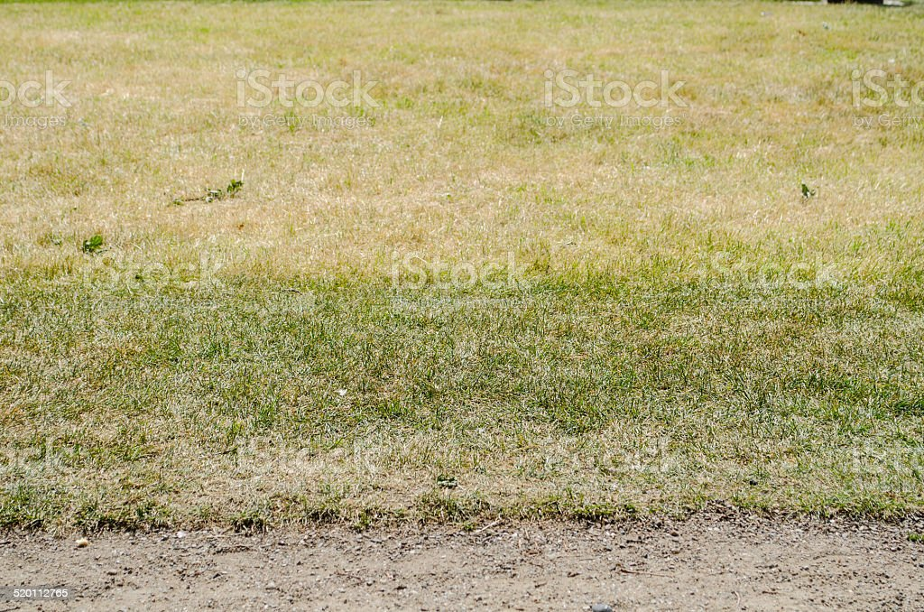 Dried Grass Background stock photo