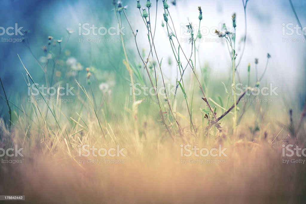 dried grass royalty-free stock photo