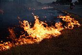 Dried grasses burning on roadside