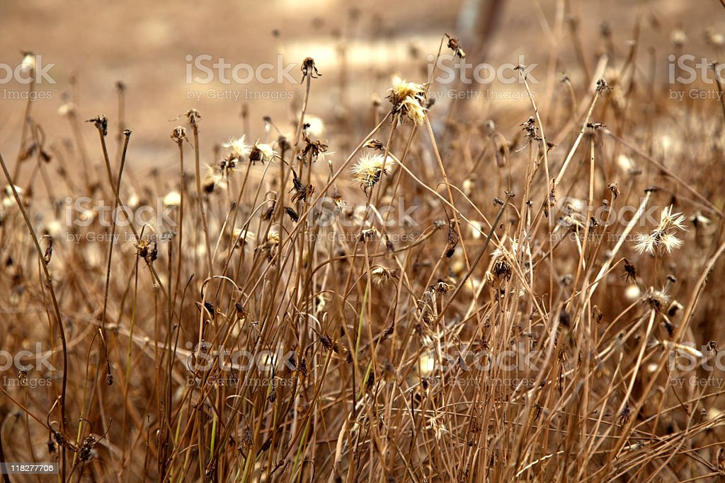 Dried Grasses stock photo