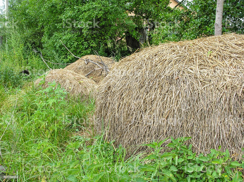 Dried hay stock photo