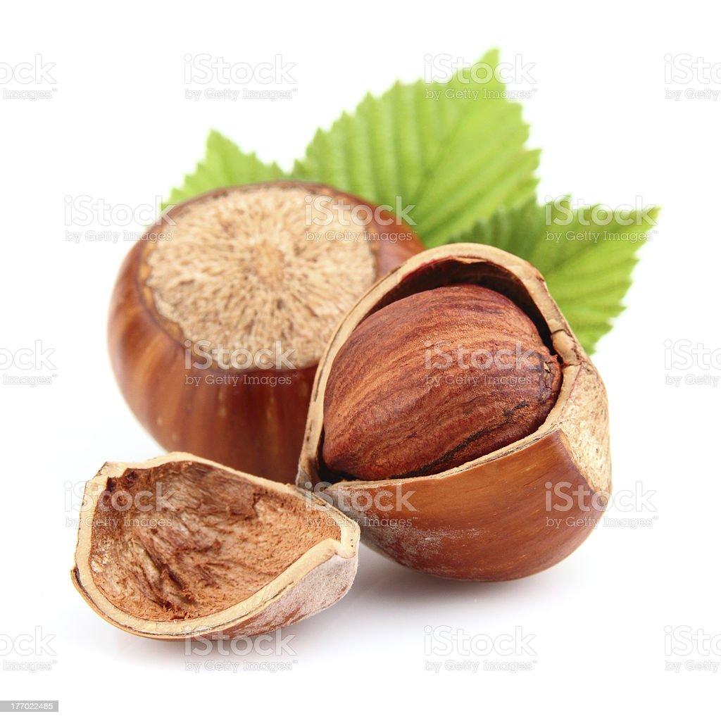 Dried hazelnuts stock photo