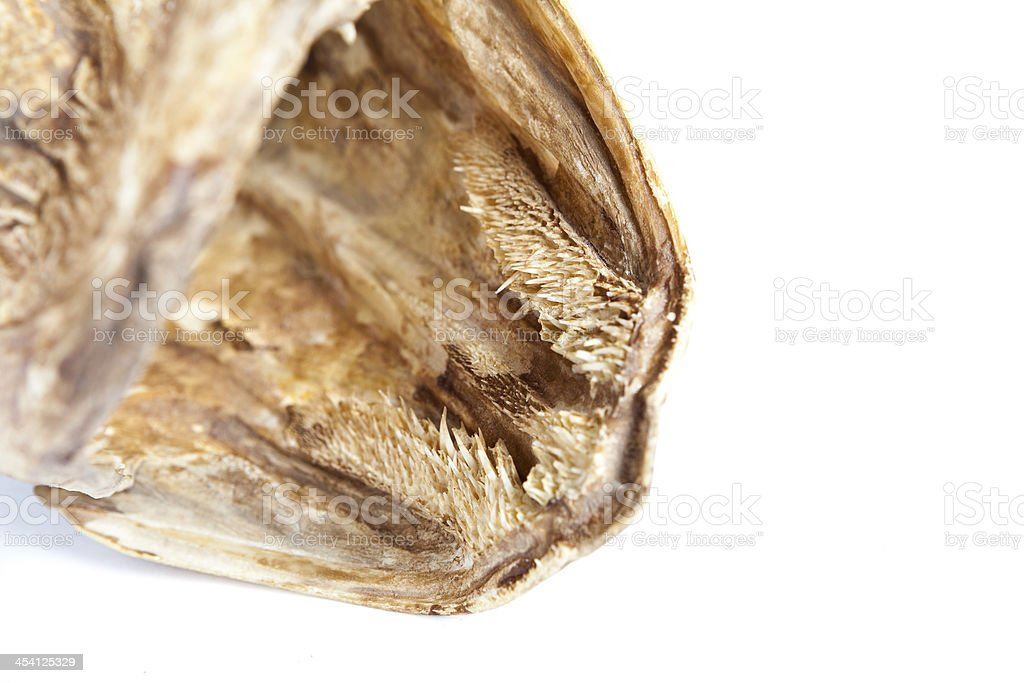 Dried head of pike isolated on white background royalty-free stock photo