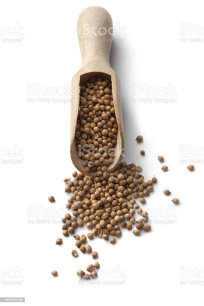 Dried Herbs and Spices: Coriander Seed royalty-free stock photo