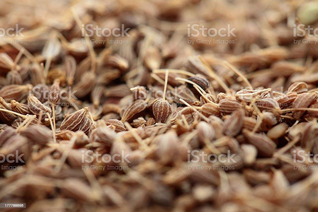 Dried herbs in macro stock photo