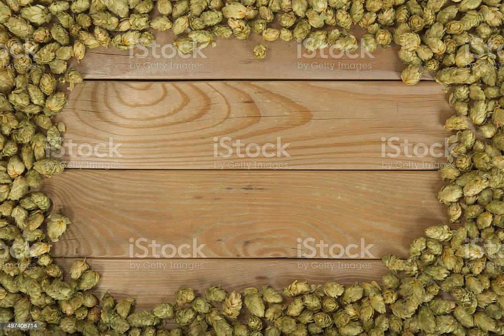 dried hops stock photo
