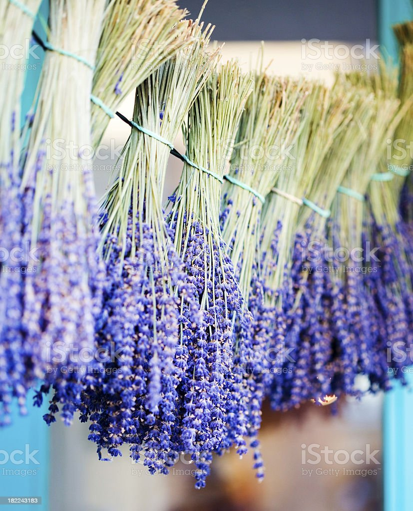 Dried Lavender royalty-free stock photo