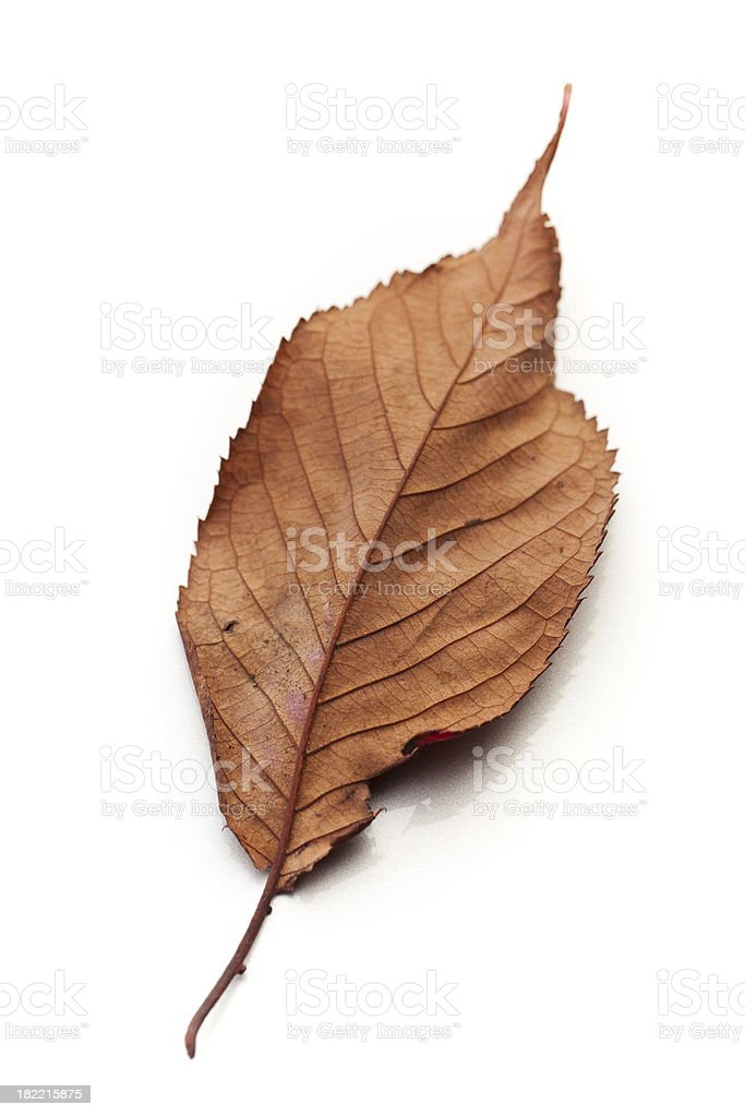 Dried Leaf Close-up stock photo