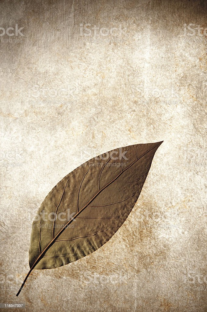 Dried Leaf On Paper royalty-free stock photo