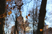 dried leaf on the background of the Church