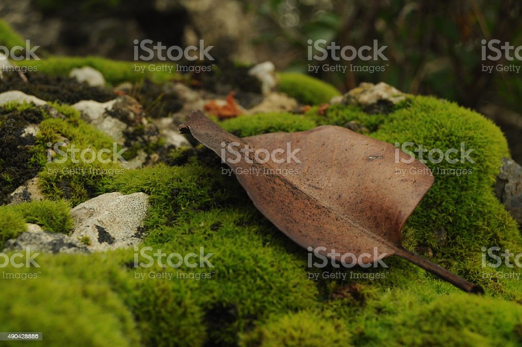 Dried leaf on the mossed rock stock photo