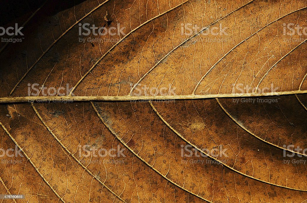 Dried leaf texture background. stock photo