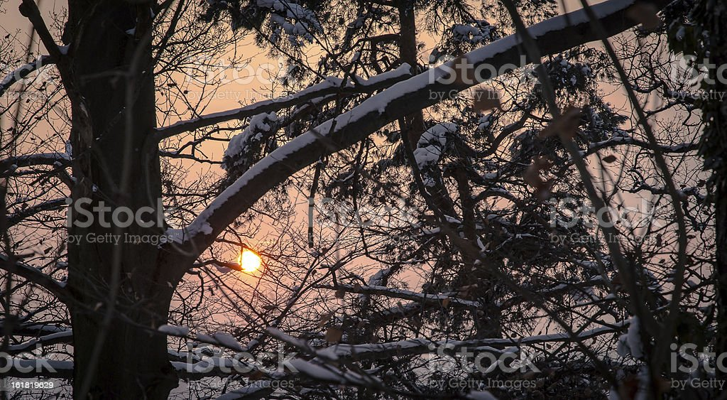 Dried leaves and branches in Winter royalty-free stock photo