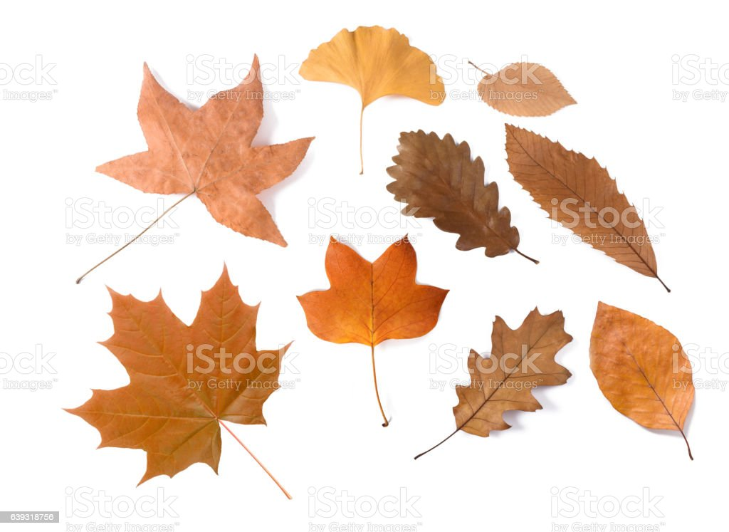 dried leaves group stock photo
