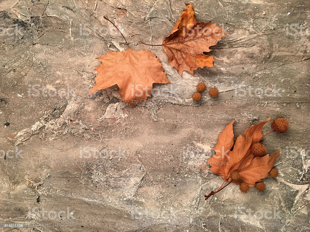 Dried leaves on wooden background stock photo