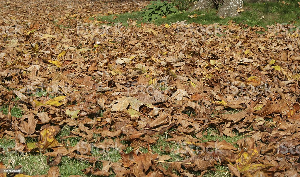 Dried leaves royalty-free stock photo