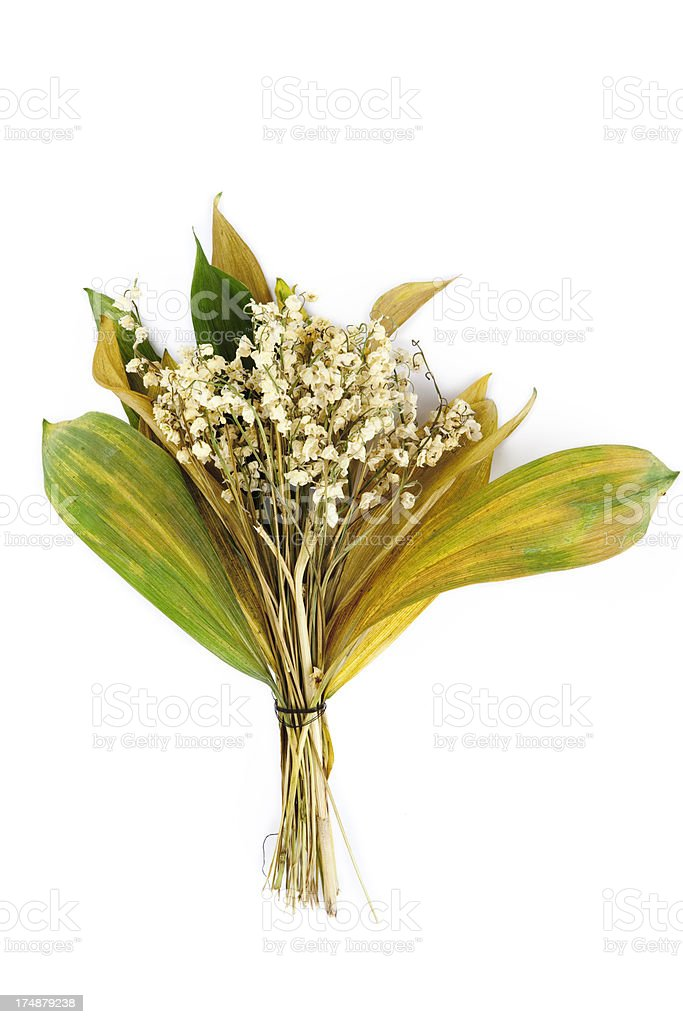 dried lily of the valley XXXL royalty-free stock photo