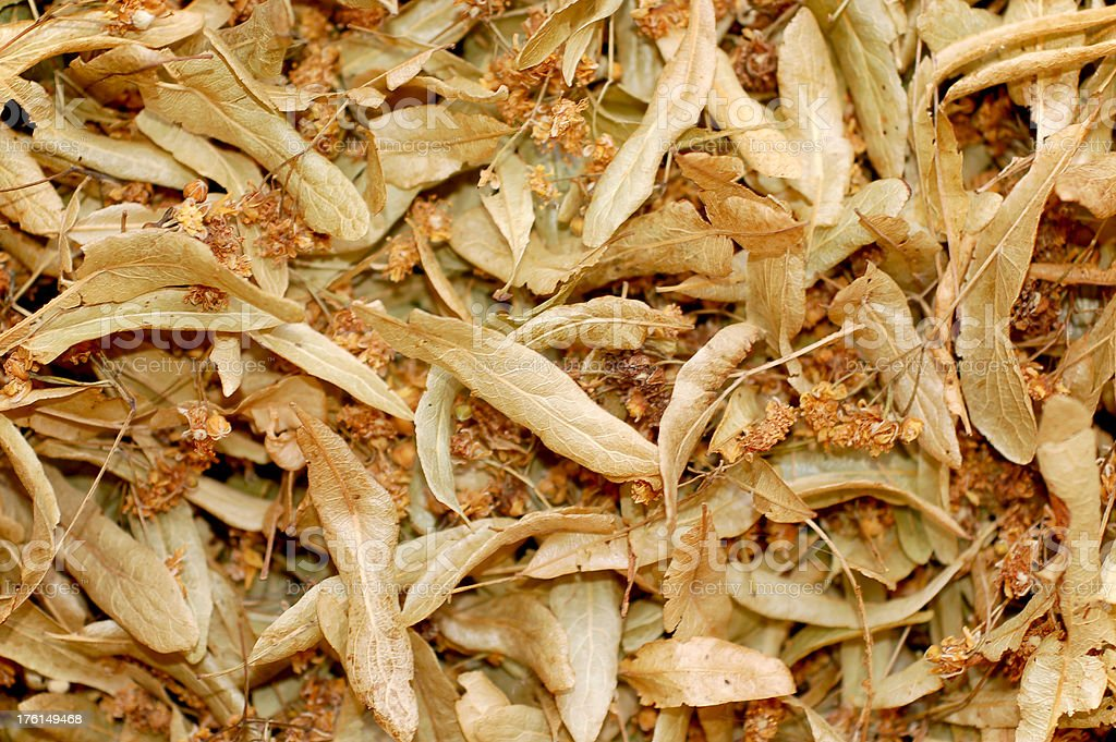 dried linden blossom royalty-free stock photo