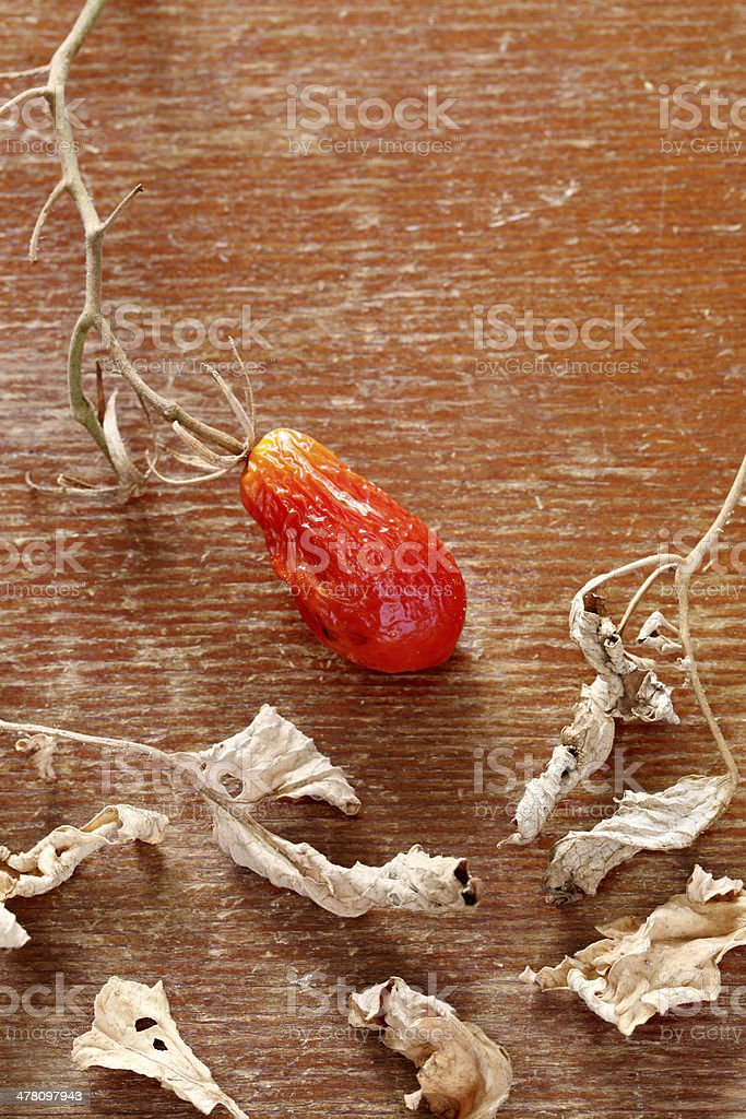 dried mini tomato royalty-free stock photo