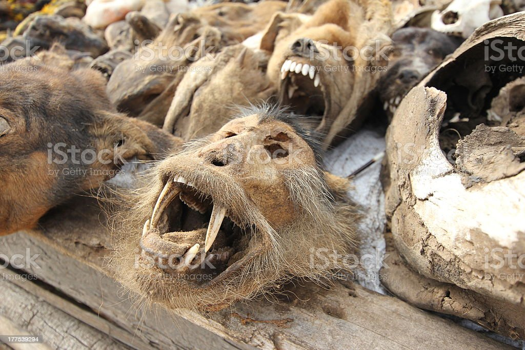 Dried monkey head at the fetish market in Togo stock photo
