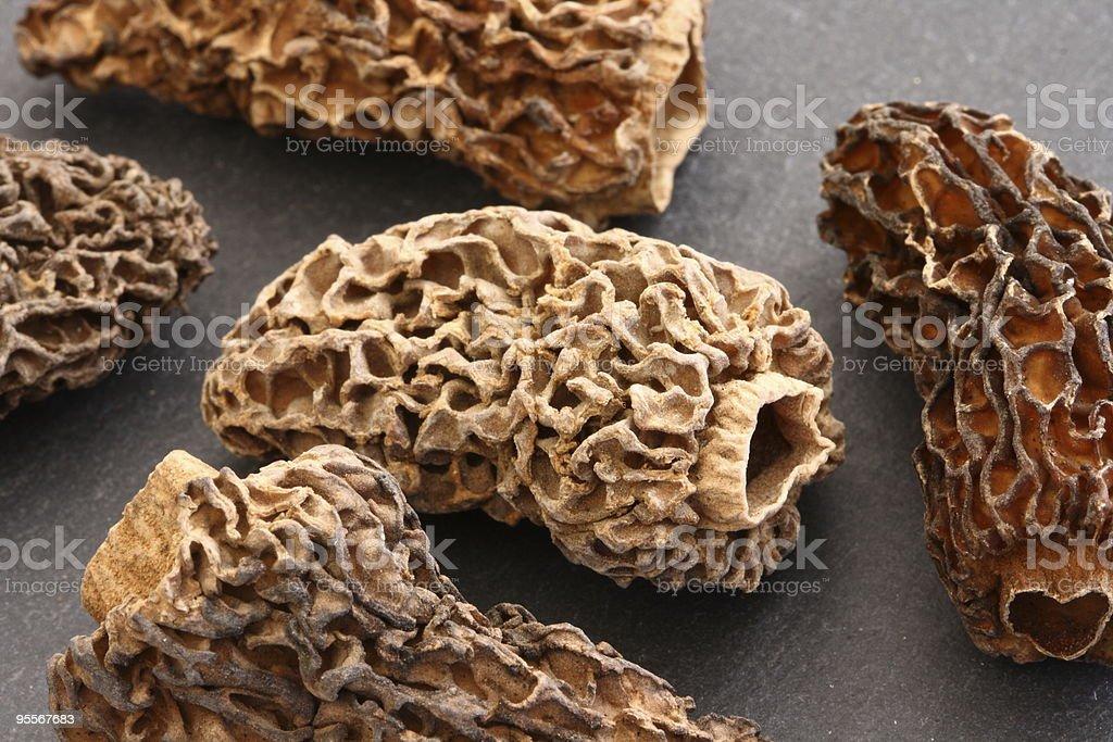 Dried morel mushrooms stock photo