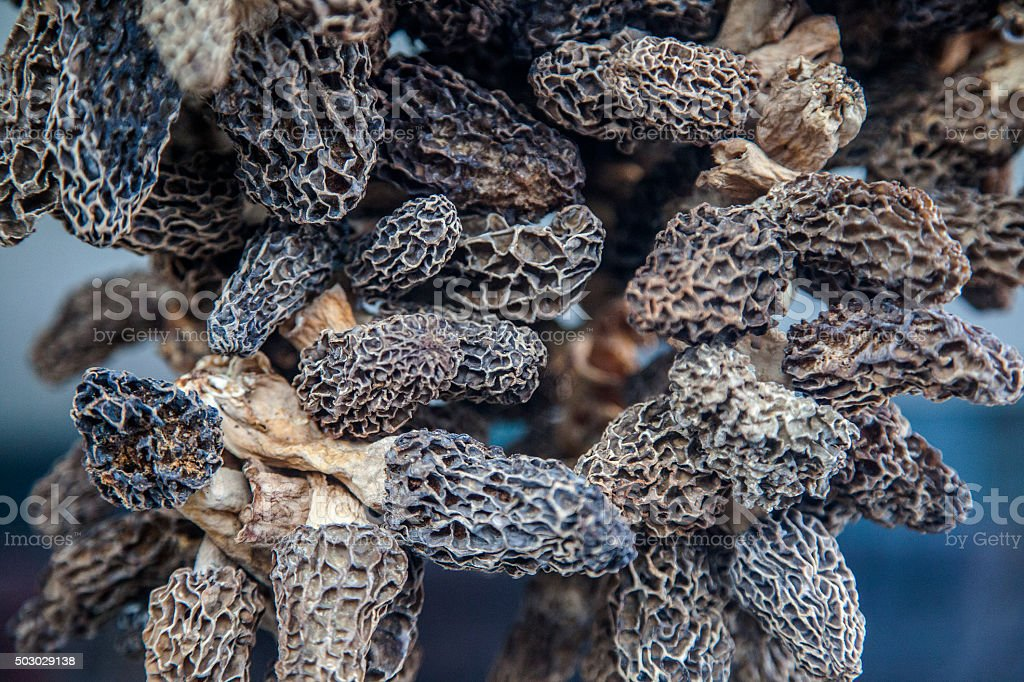 dried morel stock photo