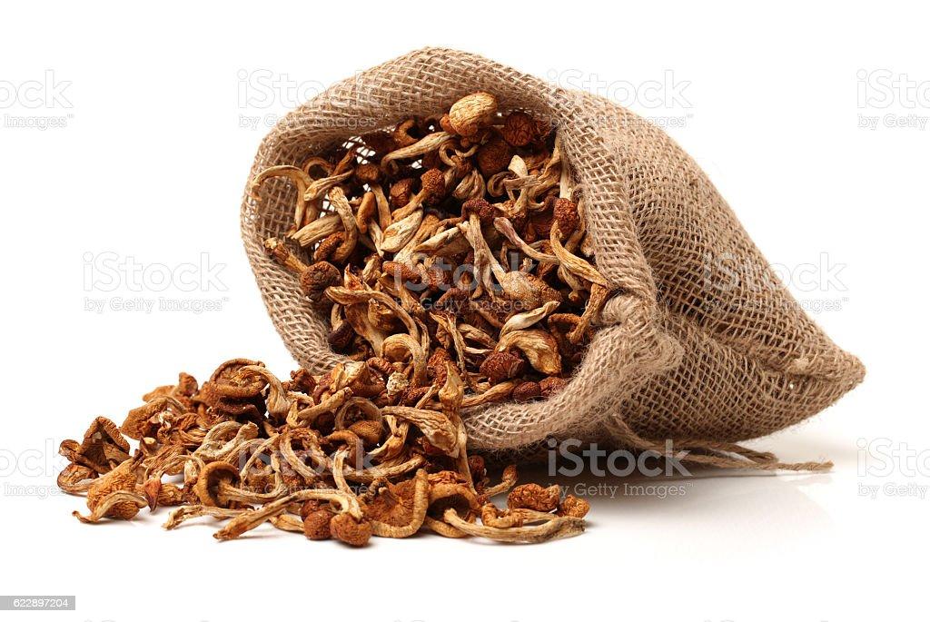 dried mushroom stock photo
