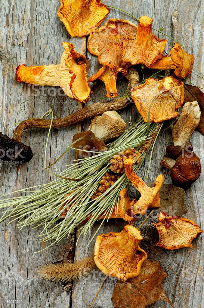 Dried Mushrooms stock photo