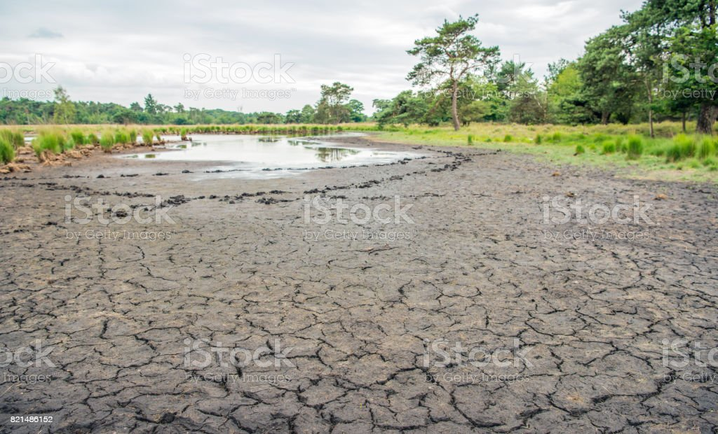 Dried natural pond in a Dutch nature reserve stock photo