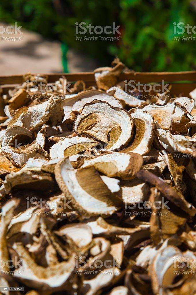 Dried Penny Bun mushrooms royalty-free stock photo