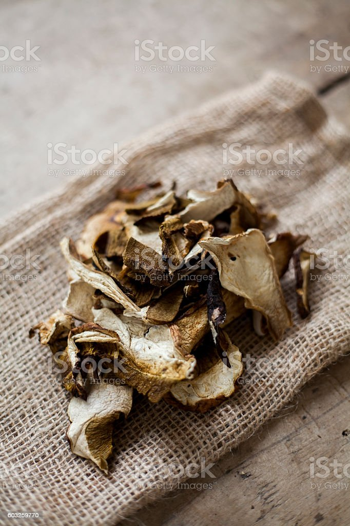 dried peppery bolete stock photo