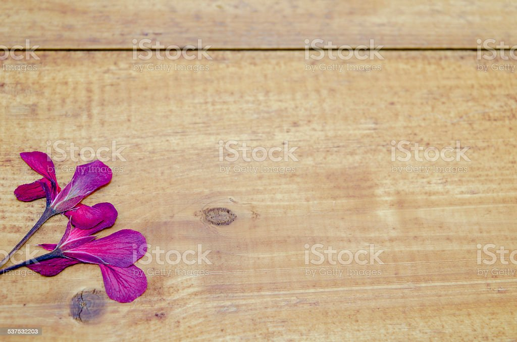 Dried pink flower on a wooden table royalty-free stock photo