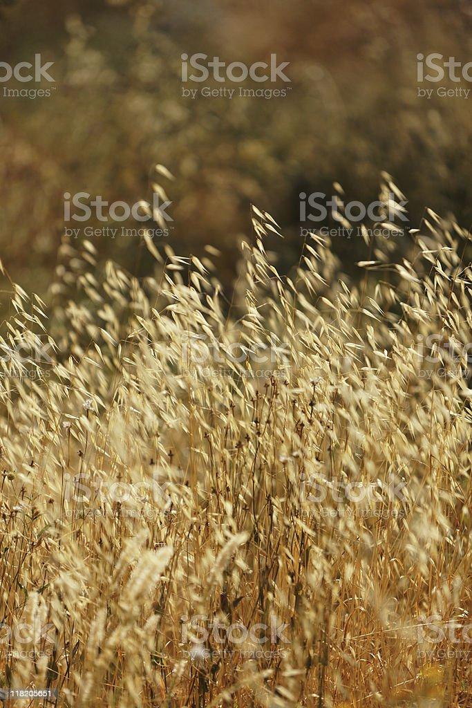Dried Plant stock photo