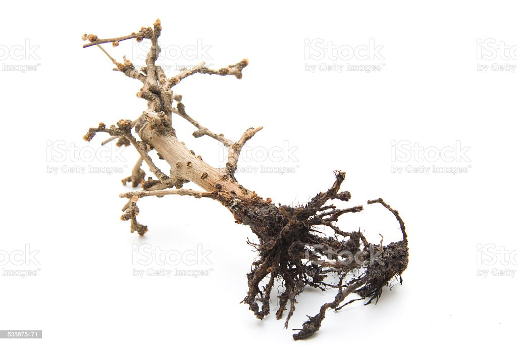 Dried plant stock photo